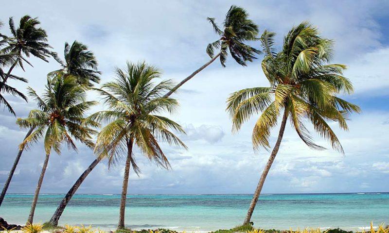 Imagen de la noticia Resiliencia: ¿eres palmera o roble?